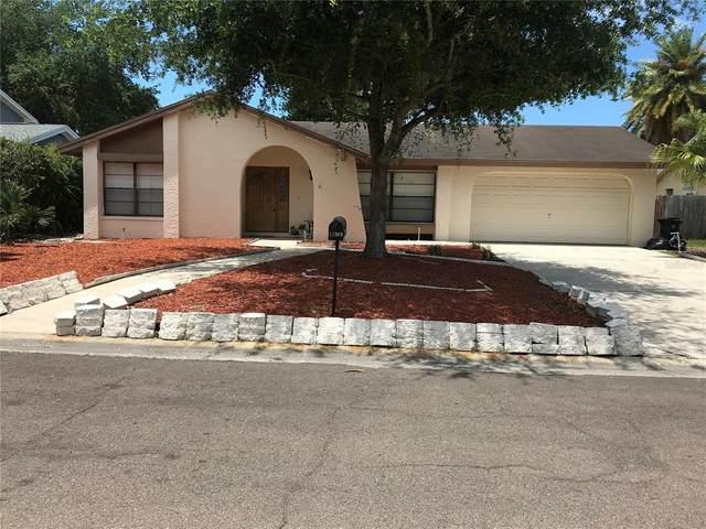 11308 Hollyglen Drive, Tampa, FL 33624 (MLS #T3307060) :: Delgado Home Team at Keller Williams