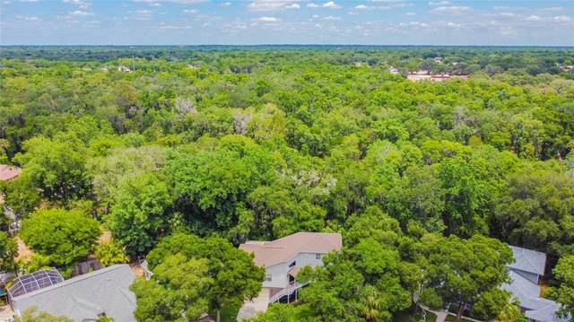 12206 Bass Oak Court, Riverview, FL 33569 (MLS #T3307452) :: Everlane Realty