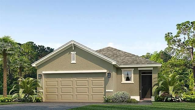 3820 Calamity Terrace, Bradenton, FL 34208 (MLS #T3310111) :: Rabell Realty Group
