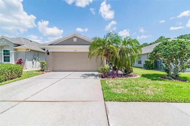 5137 Gato Del Sol Circle, Wesley Chapel, FL 33544 (MLS #T3310772) :: Delgado Home Team at Keller Williams