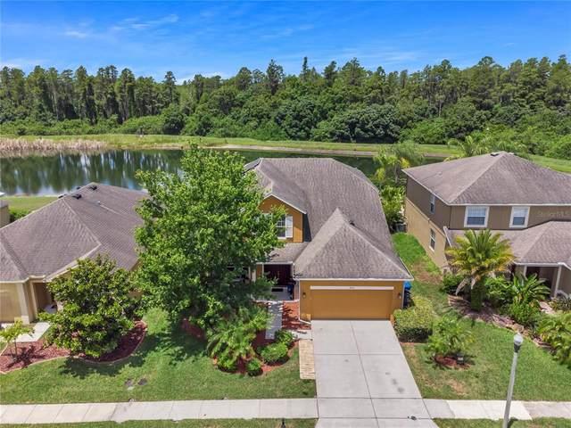 5535 Shasta Daisy Place, Land O Lakes, FL 34639 (MLS #T3311298) :: Cartwright Realty
