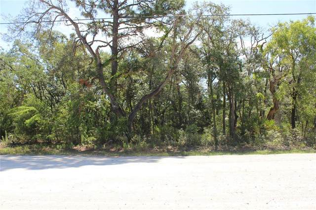 11193 Mountain Mockingbird Road, Weeki Wachee, FL 34614 (MLS #T3311482) :: The Hustle and Heart Group