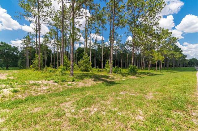 Pony Pond Road, Dade City, FL 33523 (MLS #T3311774) :: Gate Arty & the Group - Keller Williams Realty Smart