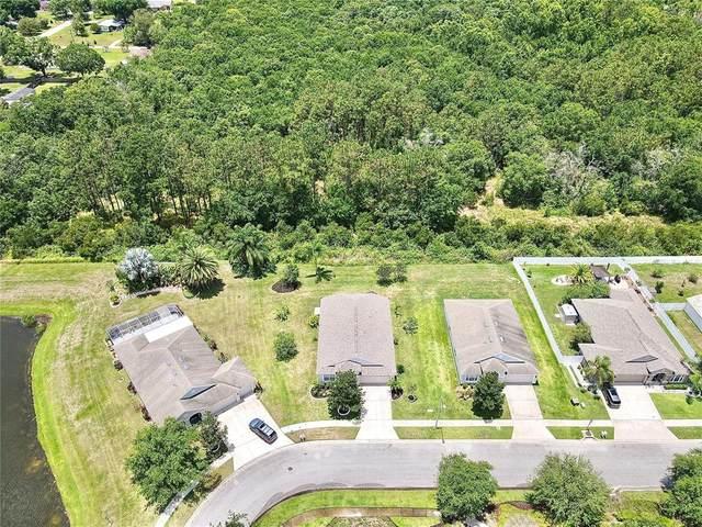 7801 Blackhill Street, Wesley Chapel, FL 33545 (MLS #T3312236) :: Delgado Home Team at Keller Williams