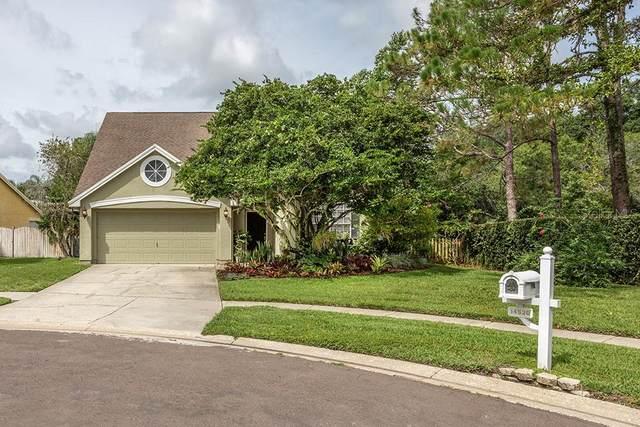 14520 Thornfield Court, Tampa, FL 33624 (MLS #T3312914) :: Delgado Home Team at Keller Williams