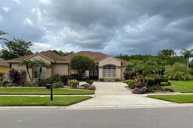 3320 Sheehan Drive, Land O Lakes, FL 34638 (MLS #T3313430) :: Vacasa Real Estate