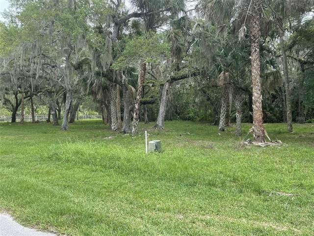 5430 Koons Drive, Port Richey, FL 34668 (MLS #T3314687) :: GO Realty