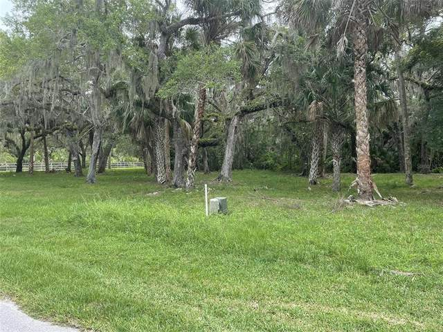 5436 Koons Drive, Port Richey, FL 34668 (MLS #T3314693) :: GO Realty