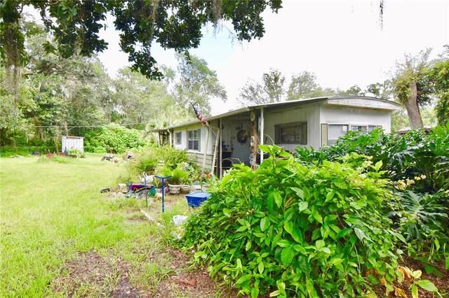 11408 Sweet Fern Drive, Riverview, FL 33569 (MLS #T3317447) :: Vacasa Real Estate