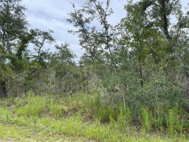 11455 Old Squaw Avenue, Weeki Wachee, FL 34614 (MLS #T3319018) :: Baird Realty Group