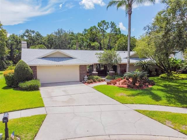5004 Chattam Lane, Tampa, FL 33624 (MLS #T3319756) :: Zarghami Group