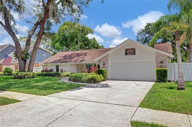 11505 Norval Place, Temple Terrace, FL 33617 (MLS #T3319873) :: Zarghami Group
