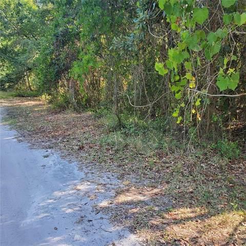 10817 Malati Street, New Port Richey, FL 34654 (MLS #T3320124) :: Century 21 Professional Group
