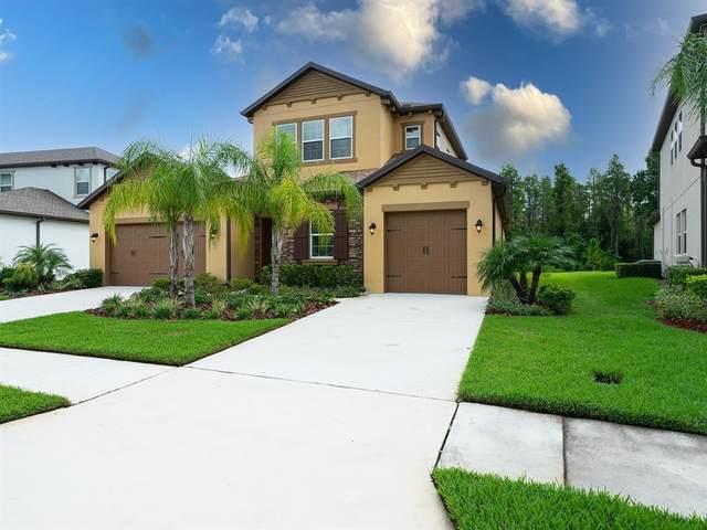 29424 Picana Lane, Wesley Chapel, FL 33543 (MLS #T3321474) :: Vacasa Real Estate