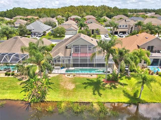 26810 Shoregrass Drive, Wesley Chapel, FL 33544 (MLS #T3324848) :: Team Bohannon