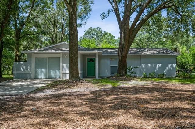 910 W Lutz Lake Fern Road, Lutz, FL 33548 (MLS #T3324874) :: Zarghami Group