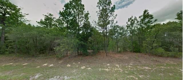 7998 N Hale Road, Citrus Springs, FL 34434 (MLS #T3329227) :: Globalwide Realty
