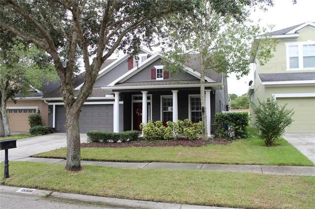 Tampa, FL 33625 :: The Nathan Bangs Group