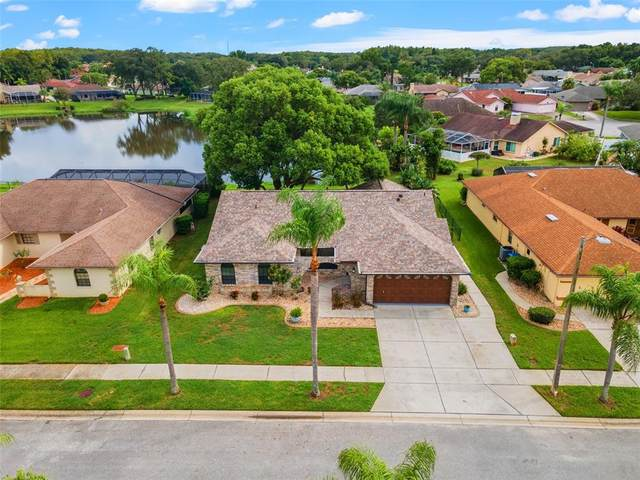 6050 Fall River Drive, New Port Richey, FL 34655 (#T3329822) :: Caine Luxury Team