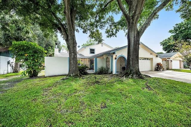 4024 Dellbrook Drive, Tampa, FL 33624 (MLS #T3329864) :: Zarghami Group