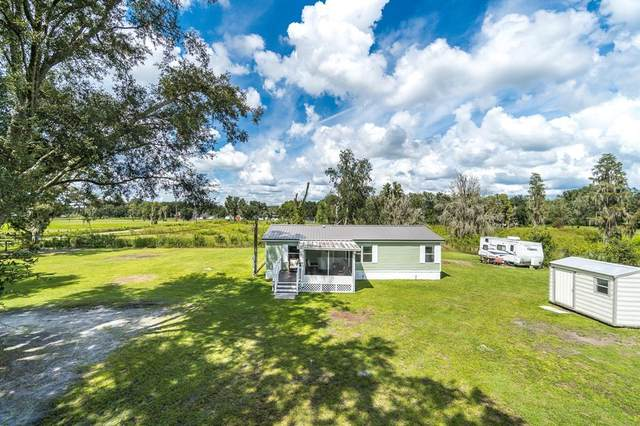 2910 E Knights Griffin Road, Plant City, FL 33565 (MLS #T3329908) :: Zarghami Group