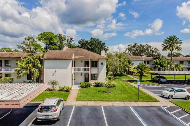 166 Lakeview Way #5, Oldsmar, FL 34677 (MLS #T3331255) :: CGY Realty