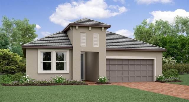 17384 SE 123RD Terrace, Summerfield, FL 34491 (MLS #T3333437) :: Everlane Realty