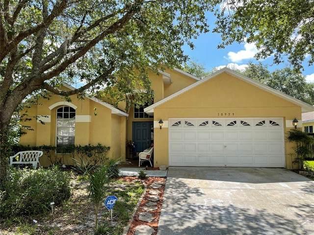 18959 Wood Sage Drive, Tampa, FL 33647 (MLS #T3334359) :: Team Bohannon
