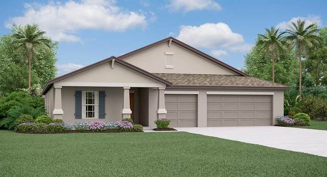 11916 Field Thistle Court, Riverview, FL 33579 (MLS #T3336813) :: Burwell Real Estate