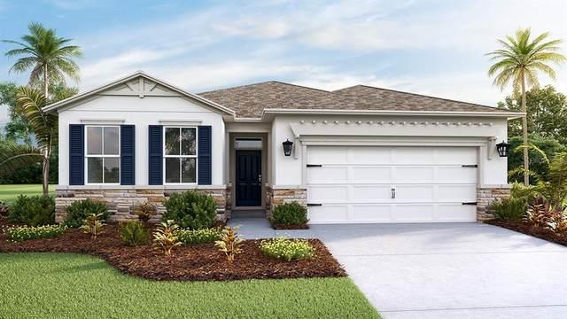 7858 Wheat Stone Drive, Zephyrhills, FL 33540 (MLS #T3336816) :: The Duncan Duo Team