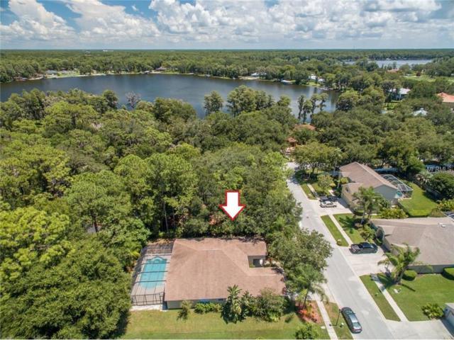 14103 Vanguard Way, Odessa, FL 33556 (MLS #U7828853) :: Griffin Group