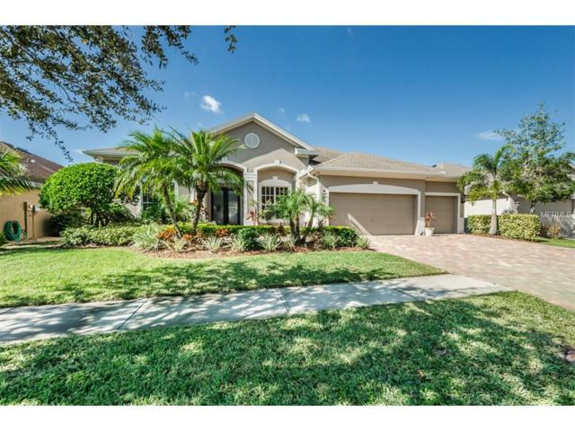 10406 Snowden Place, Tampa, FL 33626 (MLS #U7838498) :: The Duncan Duo Team