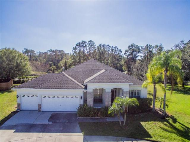 12564 Leatherleaf Drive, Tampa, FL 33626 (MLS #U7842433) :: Delgado Home Team at Keller Williams