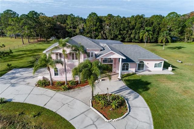 592 Appaloosa Road, Tarpon Springs, FL 34688 (MLS #U8027659) :: Beach Island Group
