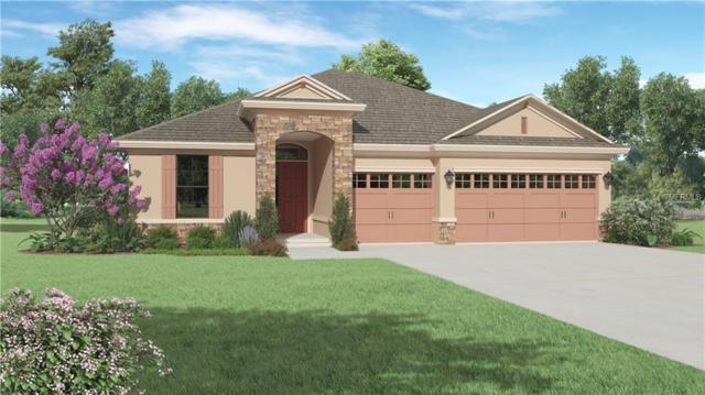 981 Bee Branch Court, Palm Harbor, FL 34683 (MLS #U8028408) :: Delgado Home Team at Keller Williams