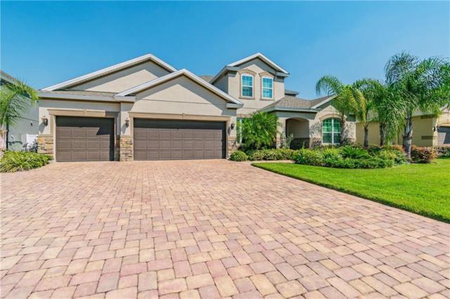 1227 Hillandale Reserve Drive, Tampa, FL 33613 (MLS #U8039428) :: Team 54