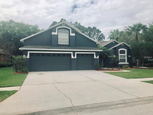 12512 Leatherleaf Drive, Tampa, FL 33626 (MLS #U8039451) :: Team 54