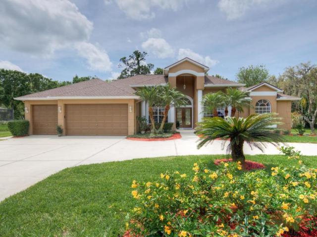 1079 Riverside Ridge Road, Tarpon Springs, FL 34688 (MLS #U8042133) :: Pristine Properties