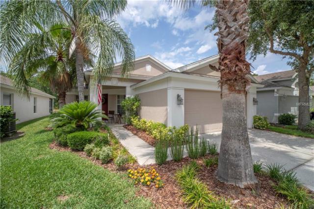 5241 Gato Del Sol Circle, Wesley Chapel, FL 33544 (MLS #U8046732) :: Team 54