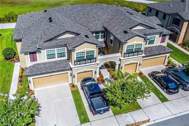 11606 Crowned Sparrow Lane, Tampa, FL 33626 (MLS #U8052210) :: Griffin Group