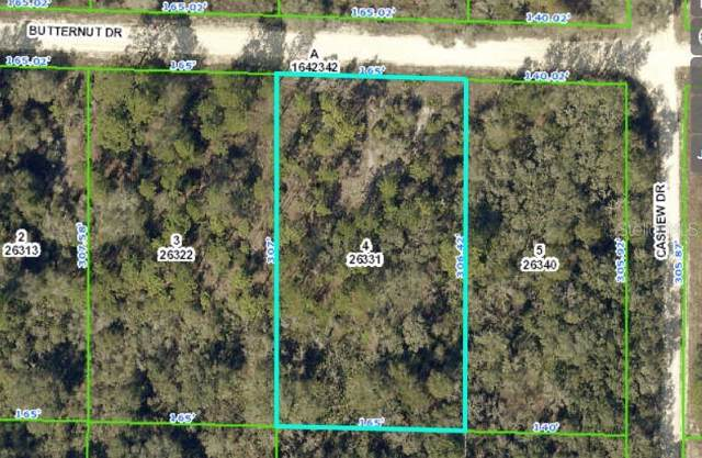 Butternut Drive, Webster, FL 33597 (MLS #U8061183) :: CENTURY 21 OneBlue