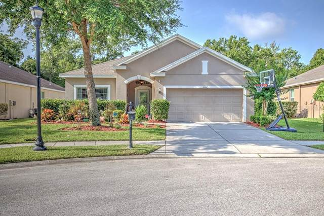 11007 Belle Haven Drive, New Port Richey, FL 34654 (MLS #U8085872) :: Team Buky