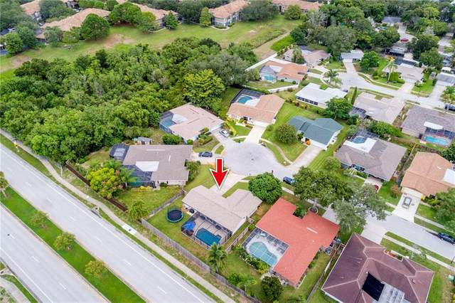 Address Not Published, Palm Harbor, FL 34683 (MLS #U8093404) :: Baird Realty Group