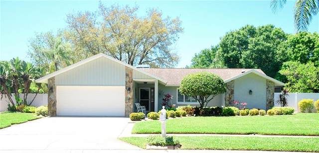 561 Hadley Drive, Palm Harbor, FL 34683 (MLS #U8119912) :: Burwell Real Estate