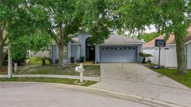 29229 Birds Eye Drive, Wesley Chapel, FL 33543 (MLS #U8120734) :: Premier Home Experts