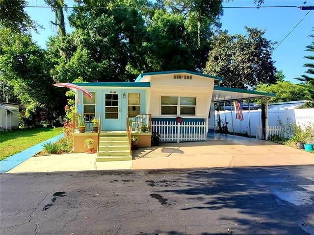 37438 Hammond Drive, Zephyrhills, FL 33541 (MLS #U8122855) :: Premier Home Experts