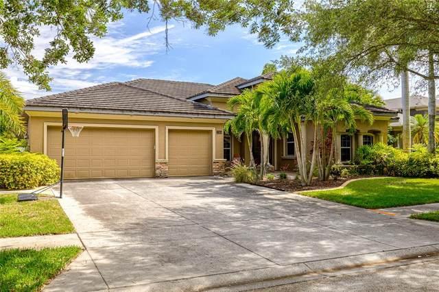 2264 Elcid Court, Palm Harbor, FL 34683 (MLS #U8123324) :: Griffin Group