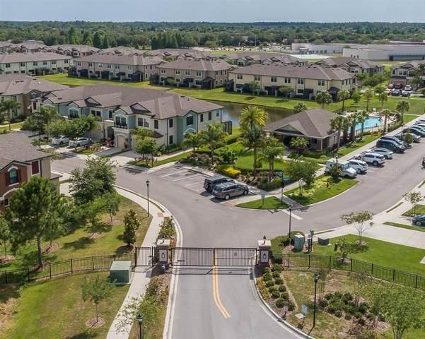 11524 Crowned Sparrow Lane, Tampa, FL 33626 (MLS #U8123611) :: The Duncan Duo Team
