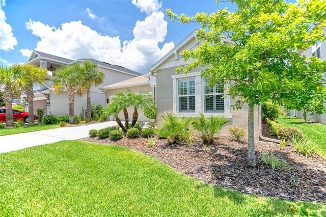 8035 Clementine Lane, Tampa, FL 33625 (MLS #U8126794) :: Cartwright Realty