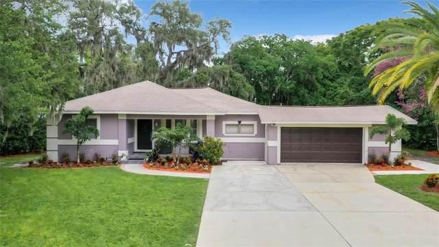 5641 Virginia Avenue, New Port Richey, FL 34652 (MLS #U8128505) :: Zarghami Group